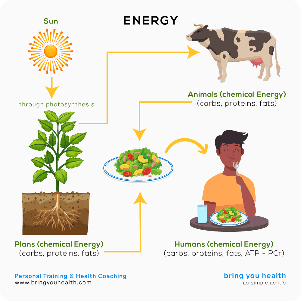 Energy Balance | Bring You Health